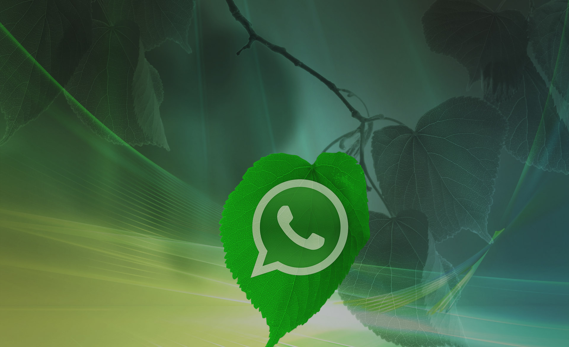 UIGTC WhatsApp's API for Business
